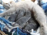 kittens-b-nest