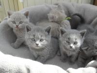 kittens-c-nest